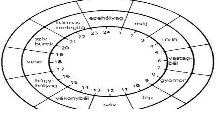 A hagyományos kínai orvoslás és az akupunktúra szerint az emberi szervek meghatározott időrendben működnek és pihennek.