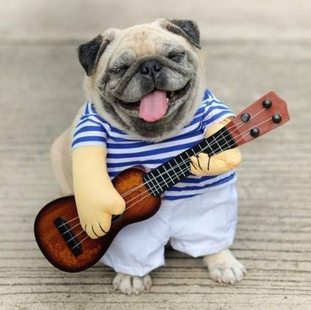 Krazypetstuff Posted To Instagram Let Your Dog Serenade You With