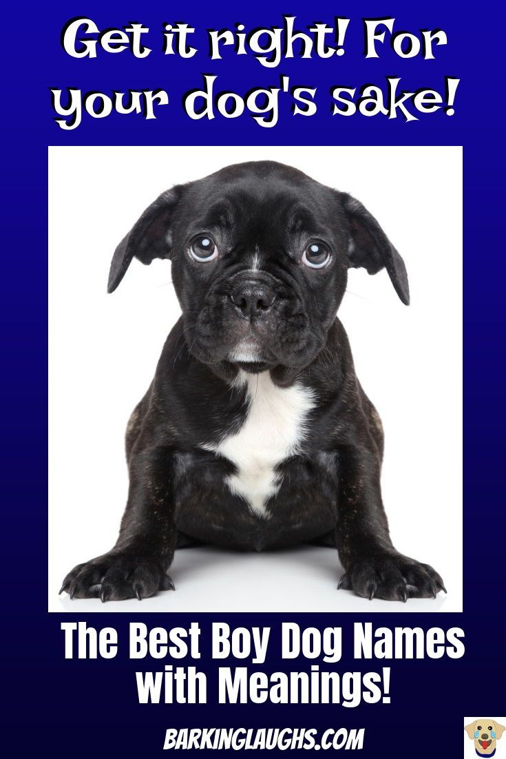 The Best Boy Dog Names List With Meanings Boy Dog Names Dog Names Good Boy Dog Names