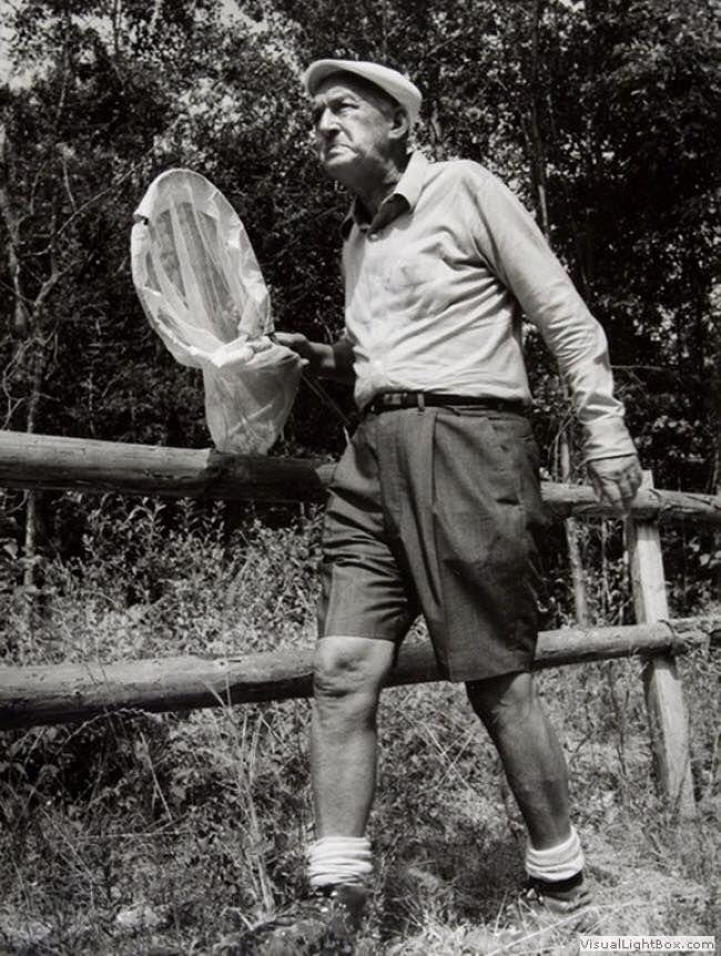 Владимир Набоков ~1960-70 Швейцария , ловля бабочек ...