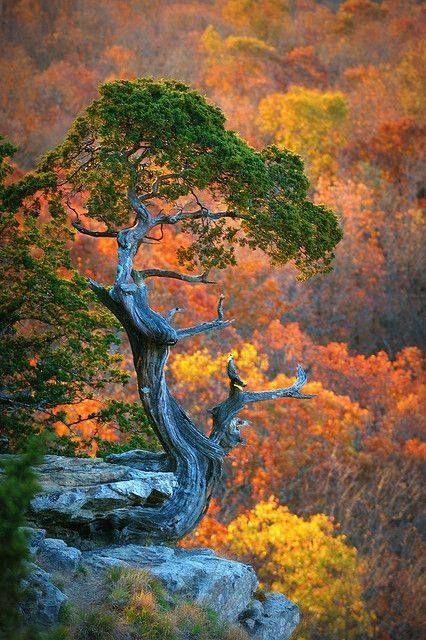 [Monte Magazine, Arkansas] > [El Monte Magazine, oficialmente nombrado Montaña Magazine, es la montaña más alta en el estado de Arkansas y el sitio del Parque Estatal Monte Magazine. (Wikipedia)] » Mt. Magazine, AR