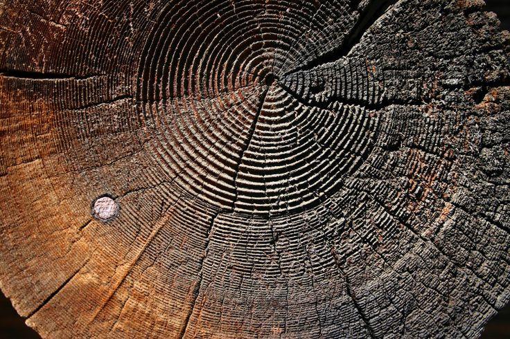 Este tipo de madera se llama ALERCE y se utiliza para decoración ...