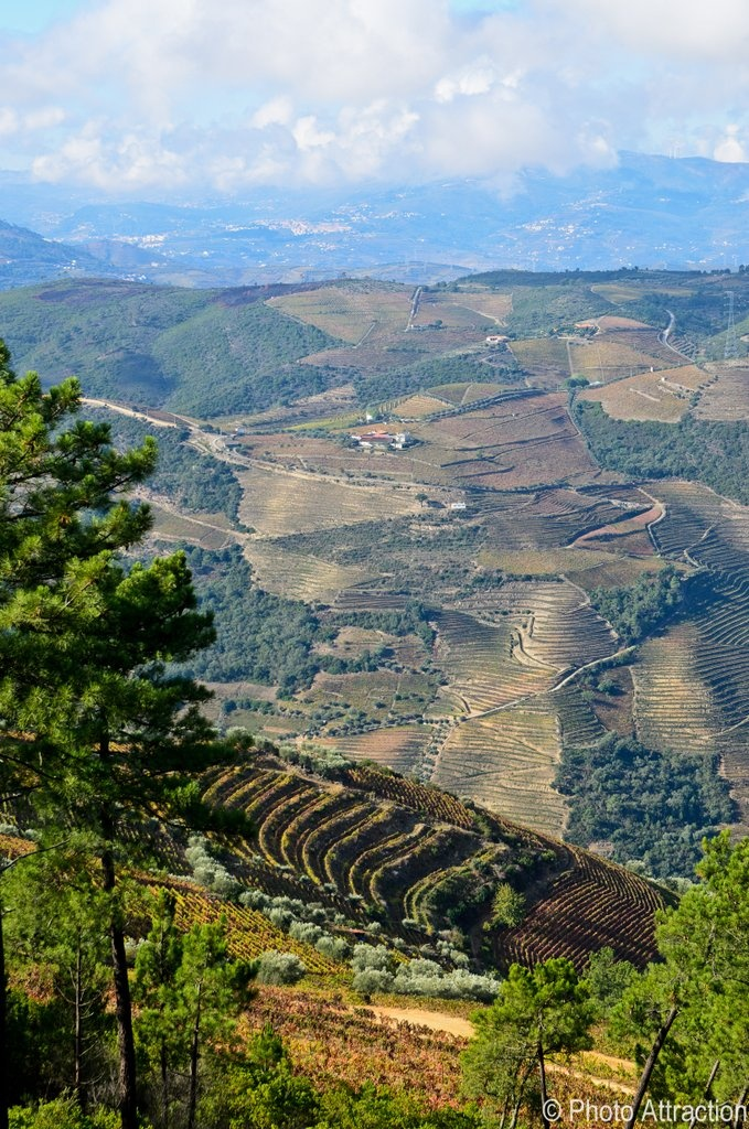 Douro - Portugal. First demarcated wine region in the world, UNESCO humanity heritage. Port is comes from here.