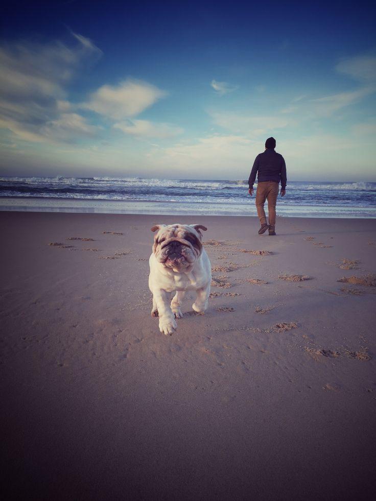 Bouledogue Anglais - Rocky - Ballade à la plage - English Bulldogs