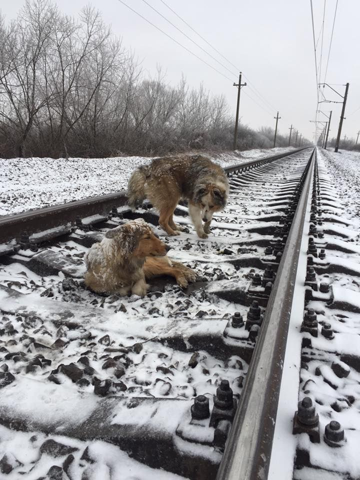 Благодаря неравнодушным людям #собак #спасли и отвезли в #приют