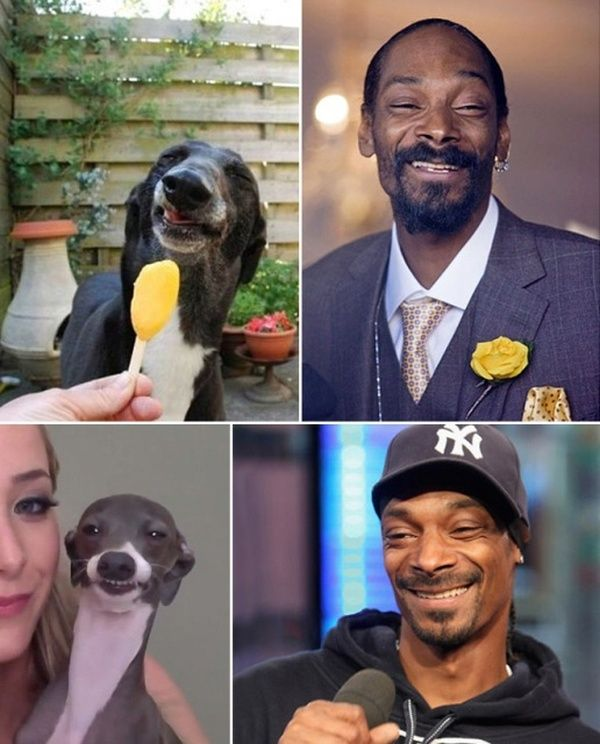 21 Celebrities Funny Photos With Their Animal Doppelgangers - Page 7 of 15