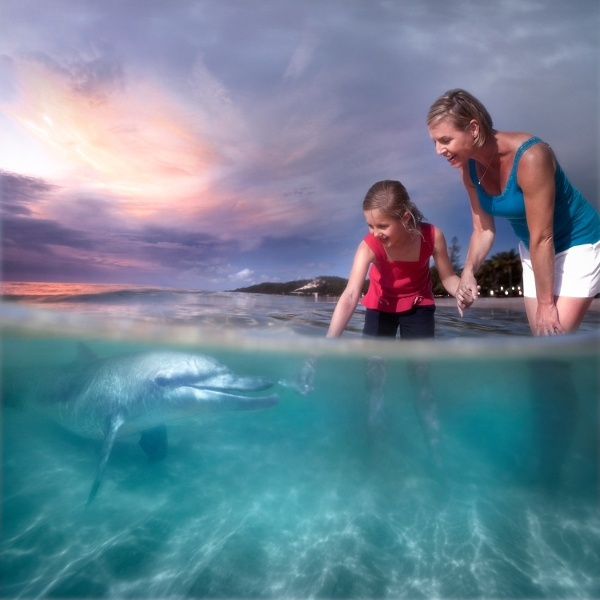 Hand feeding a wild bottlenose dolphin!