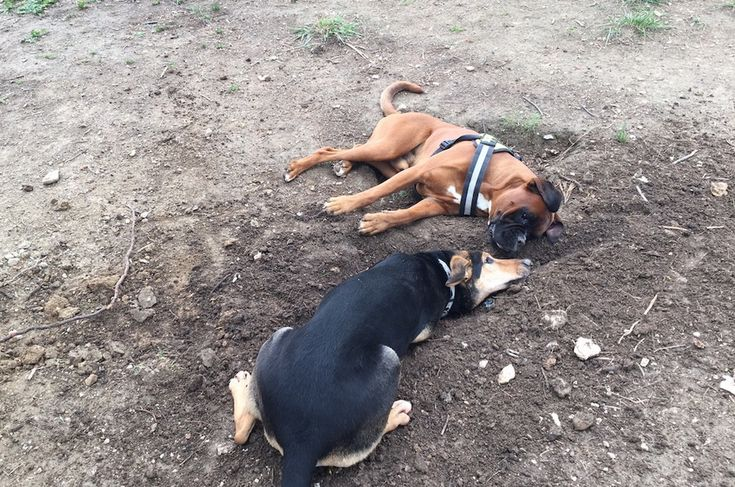 Nacho and Babis ->dig breaking :)
