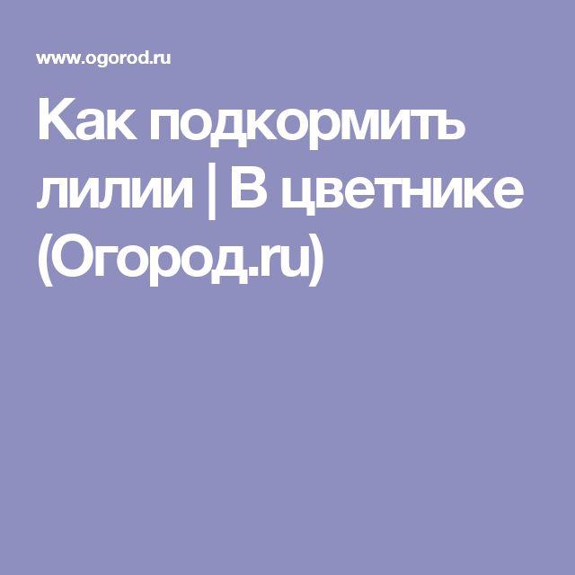 Как подкормить лилии | В цветнике (Огород.ru)