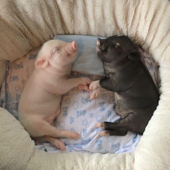 """""""Cute little piggies melt my heart."""""""
