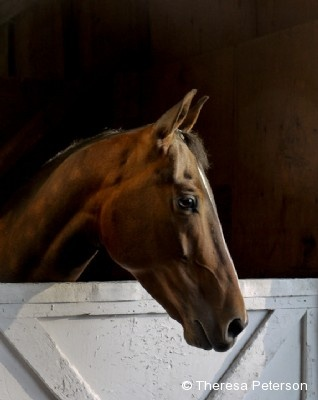 2011 Equine Ideal Online Photography Contest