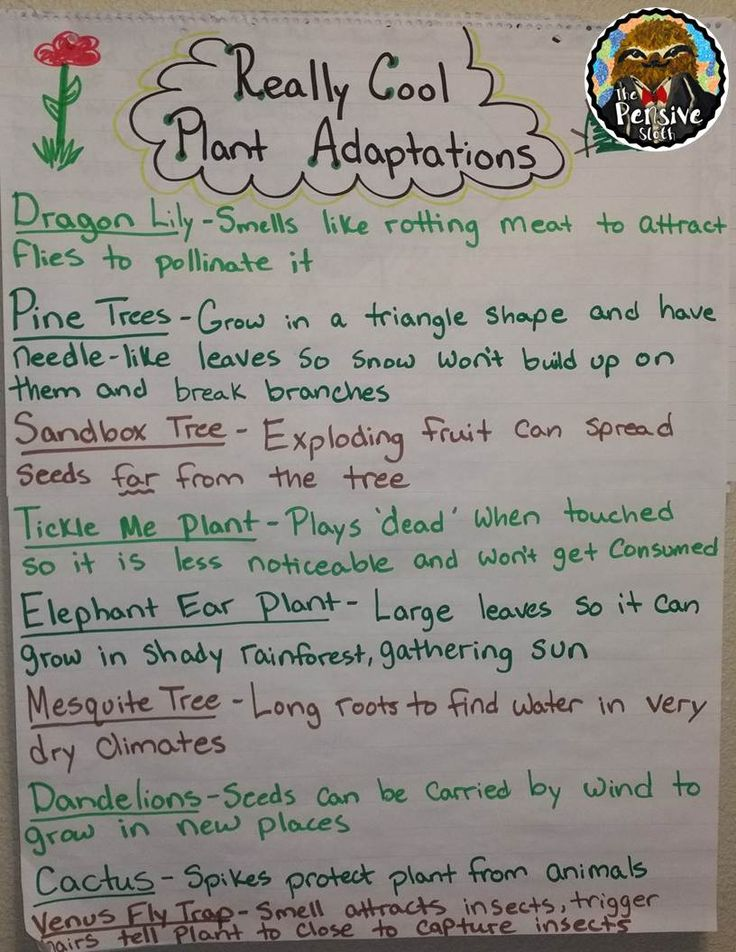Plant Adaptations Anchor Chart from The Pensive Sloth for 5th Grade STAAR Life Science