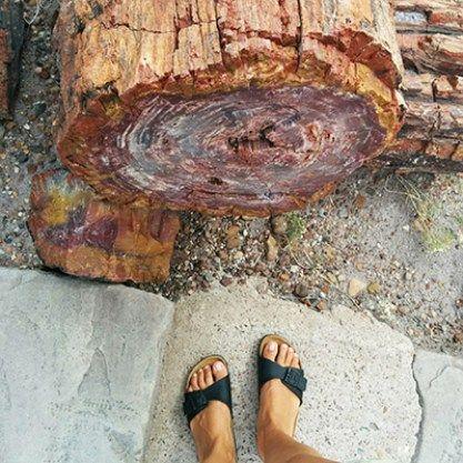 from where I stand: l'incroyable forêt pétrifiée, en Arizona