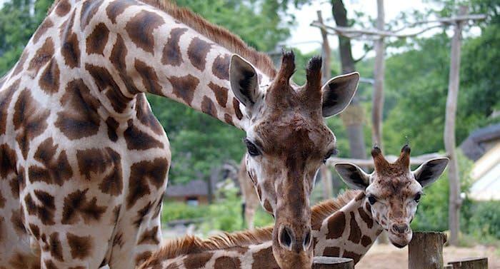Zoo Schwerin Gutschein 2 Fur 1 Coupon Code Ticket Mit Rabatt In 2020 Zoo Tier Zoo Freizeitpark