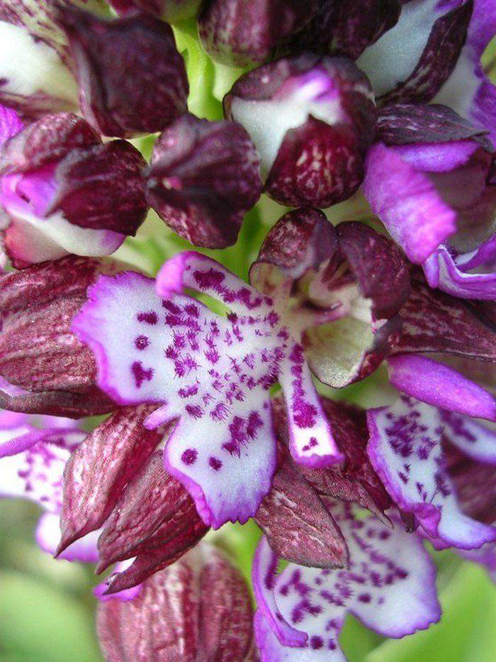 les 82 meilleures images du tableau plantes sur pinterest
