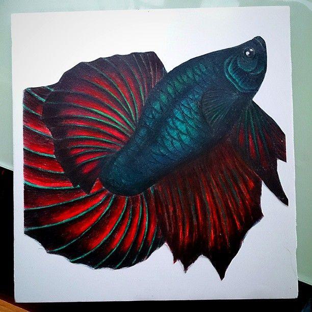 Betta coloured pencil izimler pinterest paper for Cheap betta fish