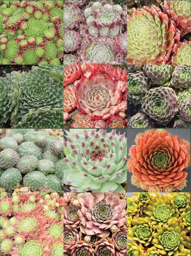 20 best images about katjan patio on pinterest plants for Succulents that do well in shade