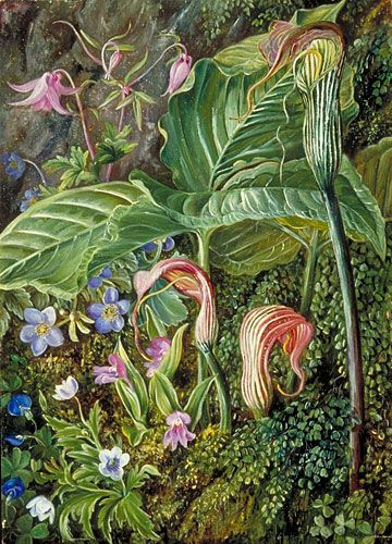 Kew: Marianne North Gallery: Painting 274: Himalayan Flowers embedded in Maidenhair Fern