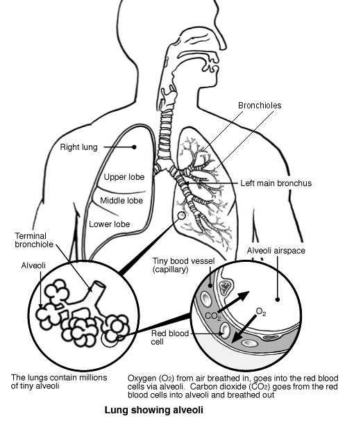 diagram of apple cider vinegar