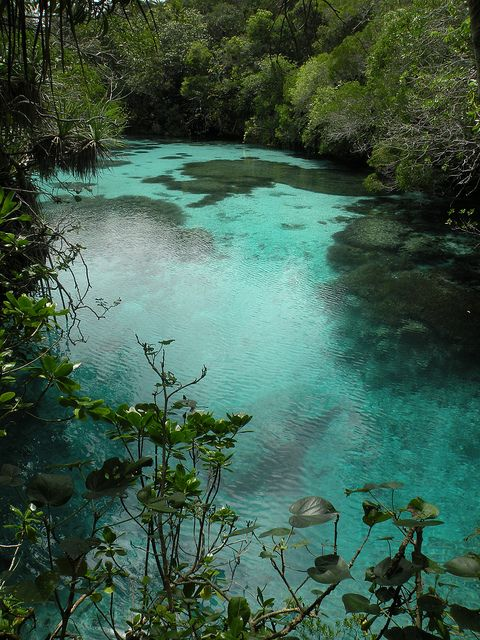 Natural spring on Maré Island, New Caledonia