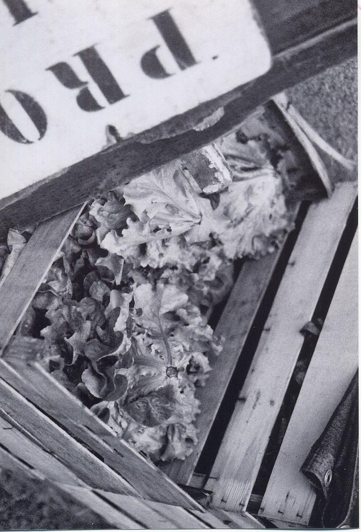 crates of lettuce