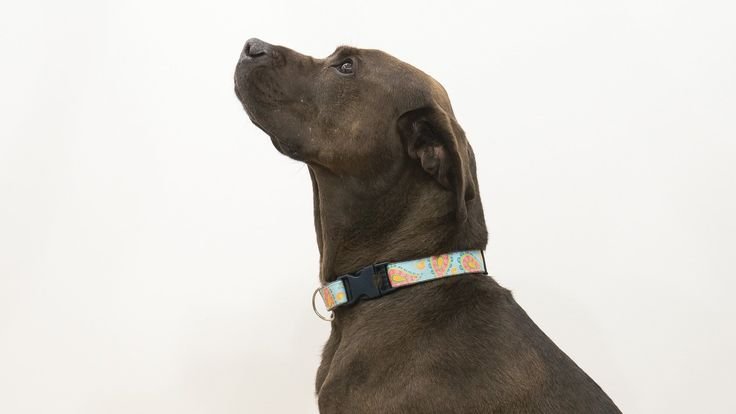 Visit our partner, Stylehaul, for more great videos on beauty and style: http://www.youtube.com/stylehaul Out with the boring dog collar and in with a stylis...