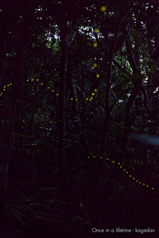 熱帯雨林にて