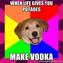 b7f28fd01b602b3798d03617876f175e vodka bad 8 best bad advice dog! images on pinterest dog memes, advice and