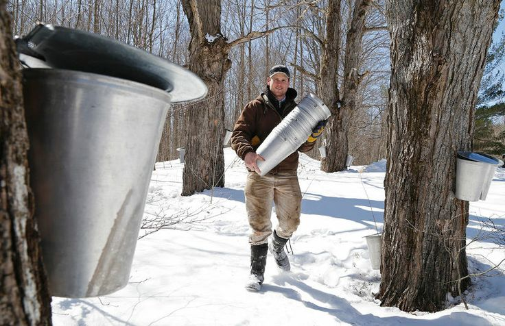 Maplefest runs through the final three weekends of March at Mclean's Berry Farm, bring the whole family out for sleigh rides, pancakes & demonstrations.