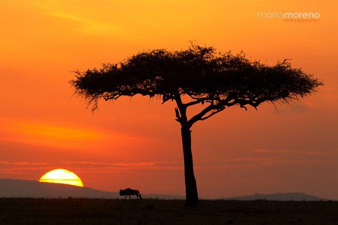 Rising Sun in Mara by Mario Moreno