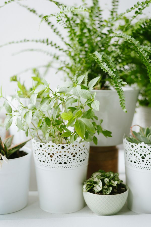 Images about potted flower wedding on pinterest