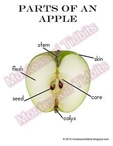 114 best Seasonal- September (Apples, Farm Preschool and ...