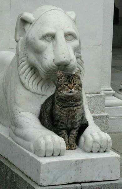 Game of thrones, feline edition