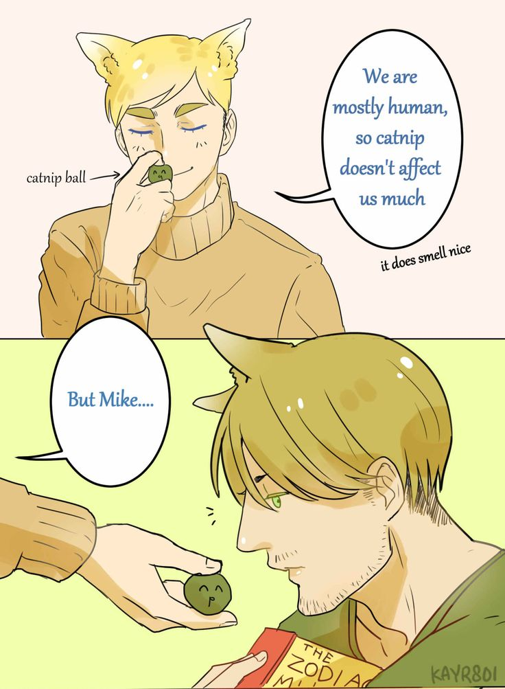 the-memoirs-of-a said: Does catnip affect Mike more due to his heightened sense of smell? Answer: