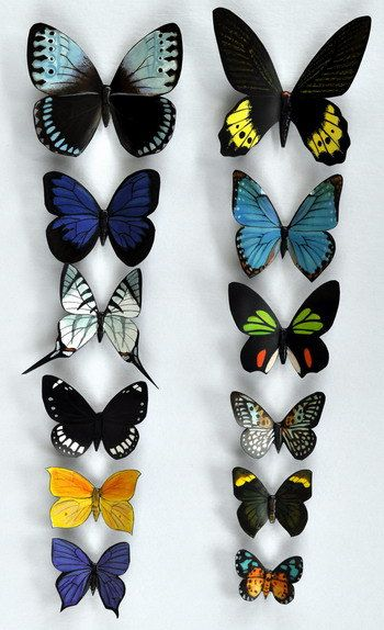 Butterfly Moth Magnets, Rainforest Butterflies, Wholesale Lot of 12 Insects Refrigerator Magnets, Kitchen Magnets