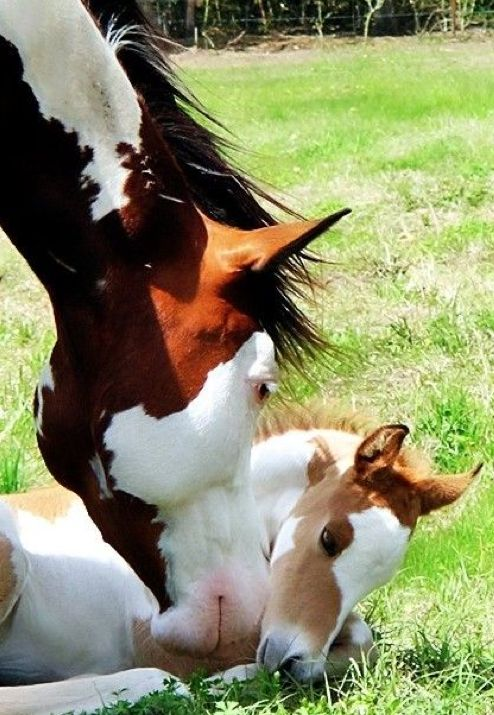 ❤❤ Mother and baby horse