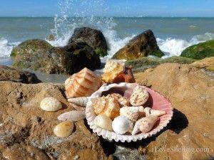 Seashells at South Seas Island Resort in Captiva, Florida