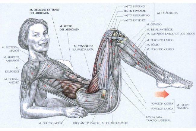 Consigue el cuerpo que siempre has deseado trabajando las glúteos, las piernas, los abdominales y la espalda. Todo en una sola rutina.