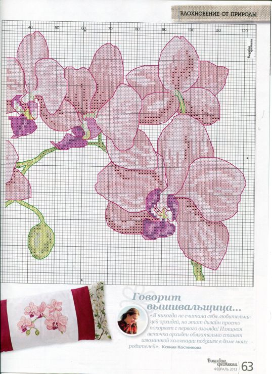 orchid_dr