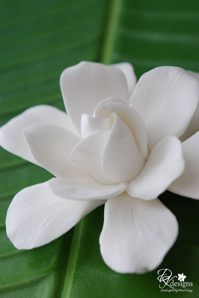 Gardeniav2 5 Beautiful Flowers Pretty Flowers White Flowers
