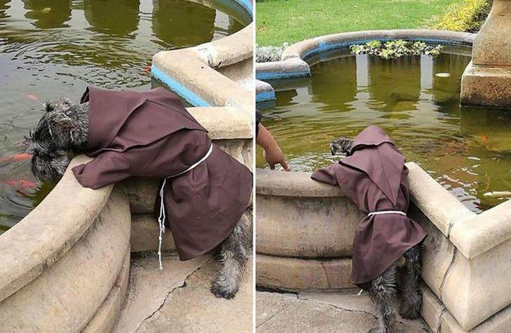 Fray Bigotón, el perro callejero que se convirtió en un monje franciscano