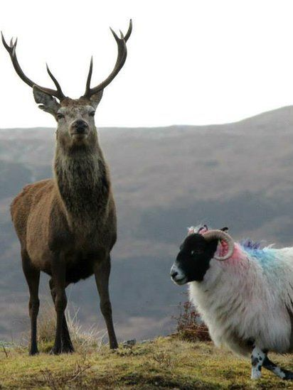 Your pictures of Scotland: 27 February - 6 March - BBC News