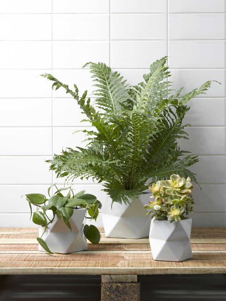 Ceramic planters | Renovate