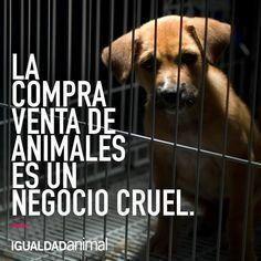 Petition · Delegación Tlalpan: Que dejen de vender cachorros en coapa y mercado de Sonora y todos los criaderos mal habidos · Change.org