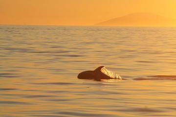 Crucero de avistamiento de ballenas con el sol de medianoche en...