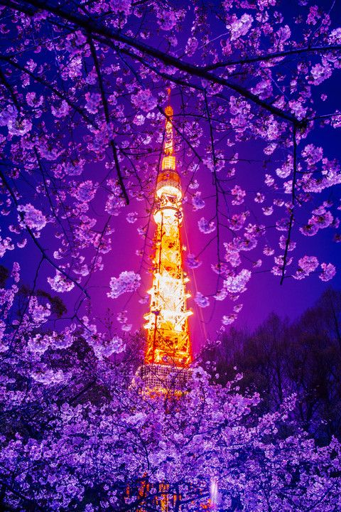 Tokyo Tower and Cherry Blossom #桜 #CherryBlossom