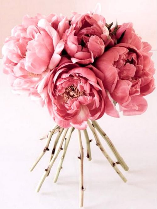 pinkBeautiful Flower, Pink Flower, Rose, Colors, Gardens, Wedding Flower, Pink Bouquet, Peonies Bouquets, Pink Peonies