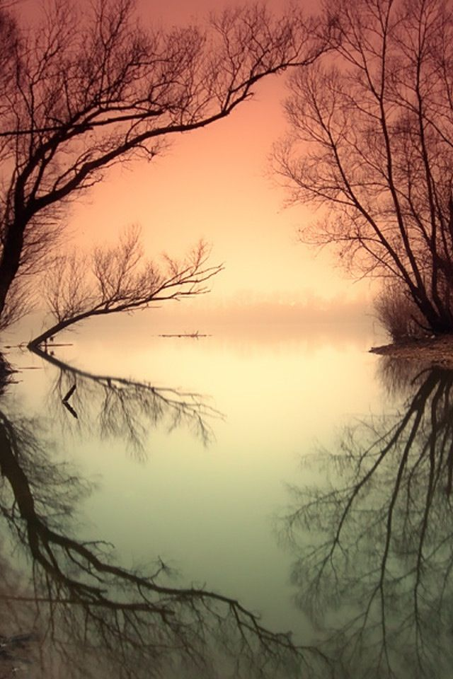 softPhotos, Reflections Photography, Nature, Adam Dobrovit, Colors, Beautiful, Trees, Bare Branches, Places