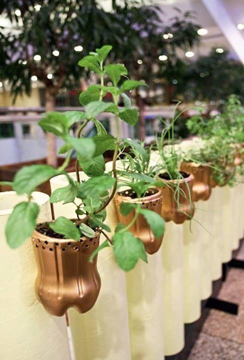 mini jardim reciclado:reciclado de botellas de plástico pintadas para maceteros