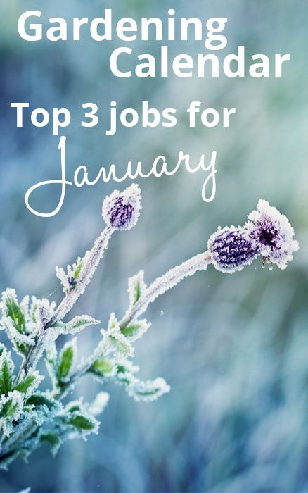 gardening-jobs-calendar-top-3-winter-gardening-jobs-januaryJanuary is known for cold frosts and bitter winds, so protect tender plants ...♥♥...